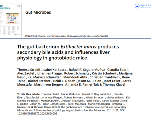 The gut bacterium Extibacter muris produces secondary bile acids and influences liver physiology in gnotobiotic mice
